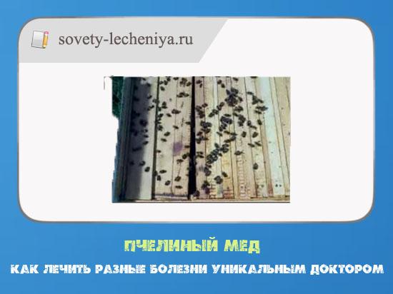 pchelinyj-med-kak-lechit-raznye-bolezni-unikalnym-doktorom