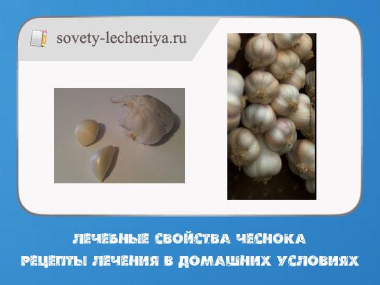 lechebnye-svojstva-chesnoka-recepty-lecheniya-v-domashnix-usloviyax