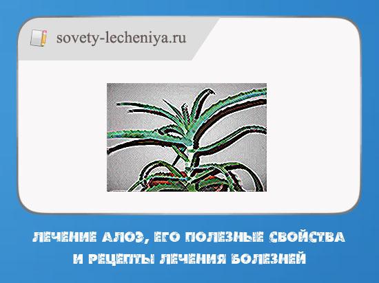 lechenia-aloe-ego-poleznye-svojstva-i-recepty-lecheniya-boleznej