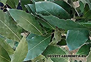lechebnye-svojstva-lavrovogo-lista