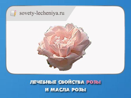 lechebnye-svojstva-rozy-i-masla-rozy