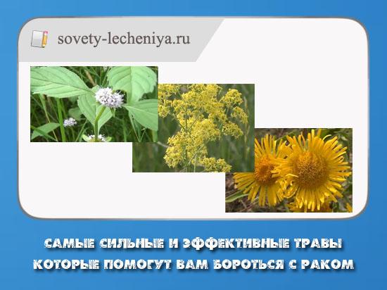 samye-silnye-i-effektivnye-travy-kotorye-pomogut-vam-borotsya-s-rakom