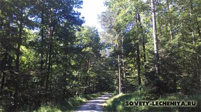 polza-svezhego-vozduxa