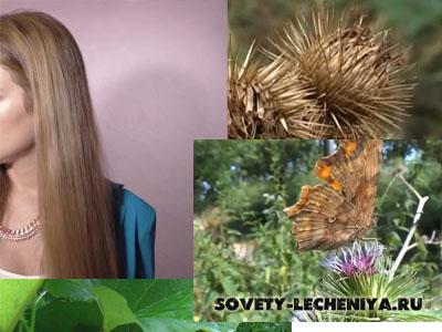 repejnik-dlya-volos