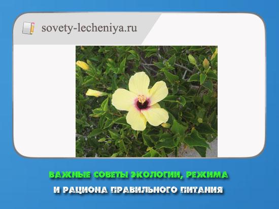 vazhnye-sovety-ekologii-rezhima-i-raciona-pravelnogo-pitaniya