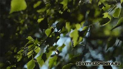 lechebnye-svojstva-listev-berezy