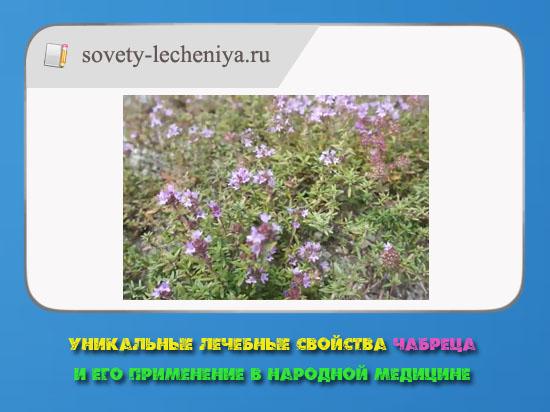 unikalnye-lechebnye-svojstva-chabreca-i-ego-primenenie-v-narodnoj-medicine
