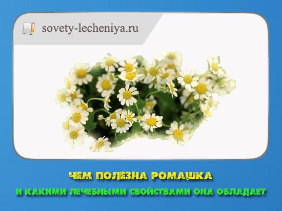 chem-polezna-romashka-i-kakimi-lechebnymi-svojstvami-ona-obladaet
