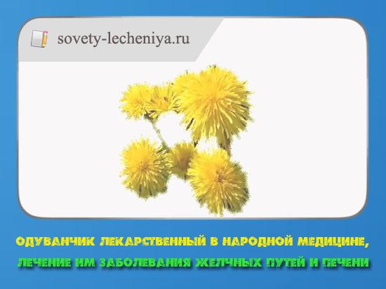 oduvanchik-lekarstvennyj-v-narodnoj-medicine-lechenie-im-zabolevaniya-zhelchnyx-putej-i-pechenie
