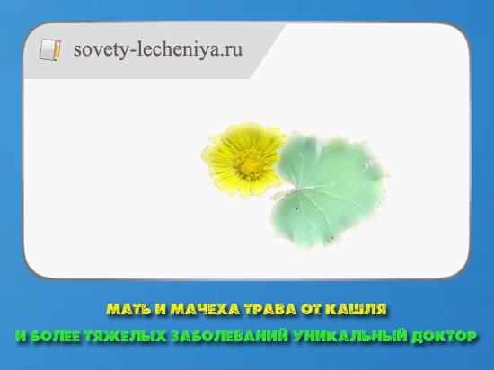 mat-i-machexa-trava-ot-kashlya-i-bolee-tyazhelyx-zabolevanij-unikalnyj-doktor